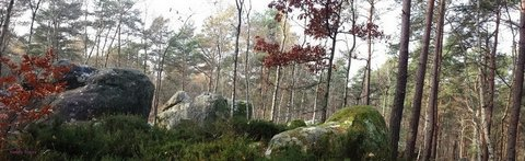 Fontainebleau : forest