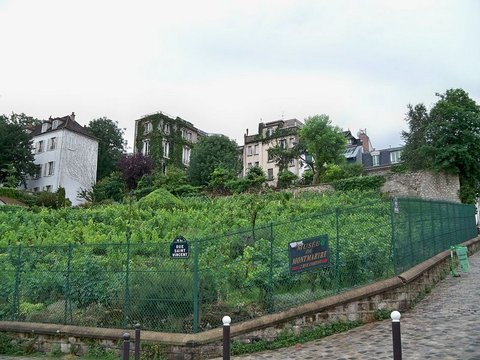 Paris : Montmartre vineyard
